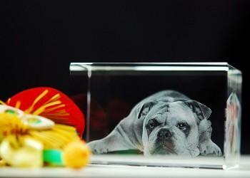 Gravure d'un chien en 3D dans le verre